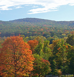 Appalachian hardwood forests